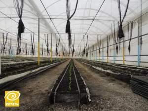 استخدام البيتموس كوسط في زراعة الخضراوات