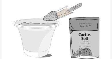 طريقة زراعة صبار الألوفيرا