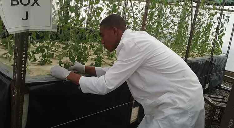 aeroponics farming