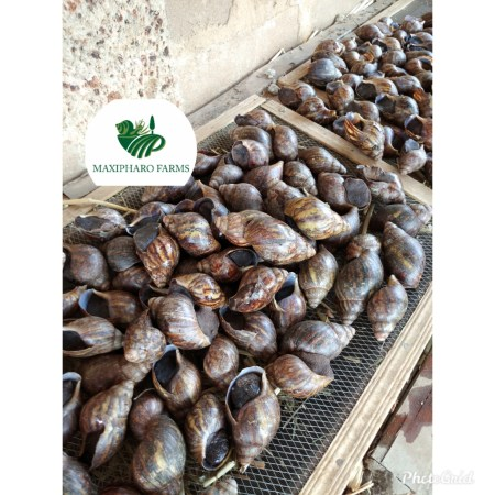 Cost and Returns of Snail Farming in Nigeria