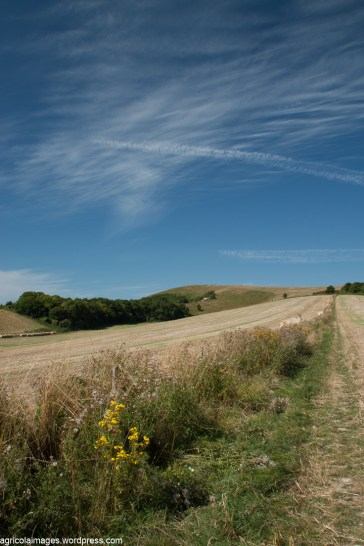 The Downs above Glynde