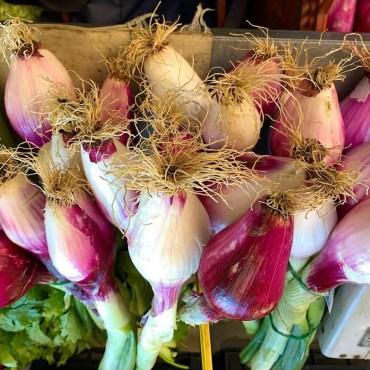 Cipolle Tropea Fresche.tabasso