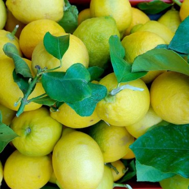 Limoni Di Sorrento Tabasso