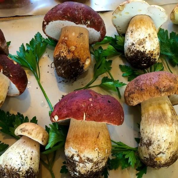 Funghi Porcini Tabasso