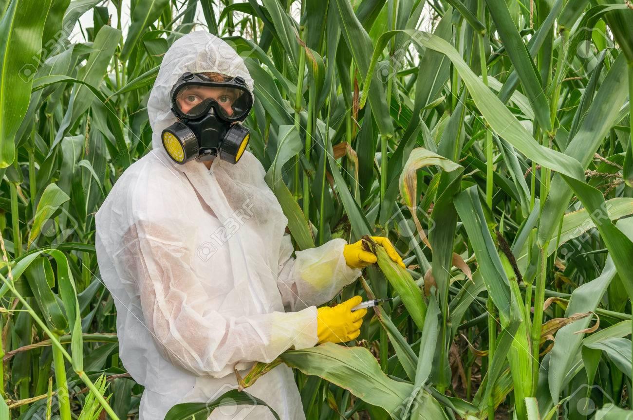 Condições pré-existentes, ausência de licença médica e seguro de saúde colocam os trabalhadores agrícolas em risco aumentado de coronavírus