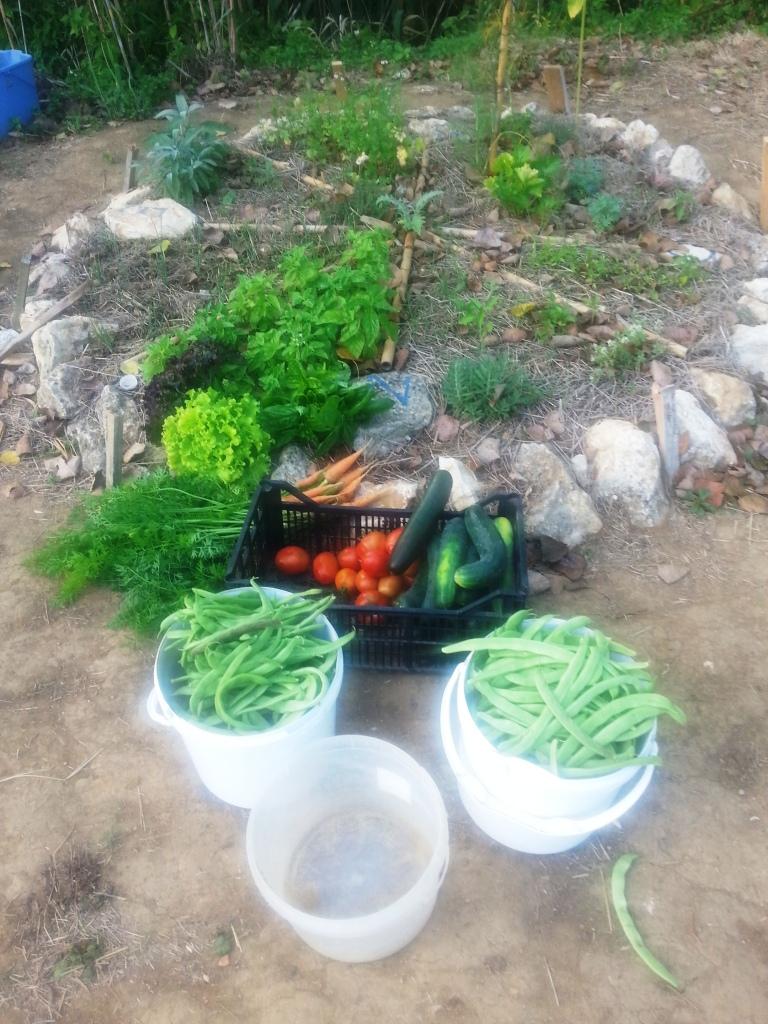 A colheita antes da pausa para a bucha