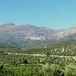 Olivar de Jaén