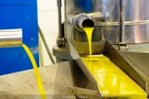 El aceite de oliva español, el peor pagado.