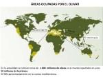 La producción mundial de aceite crecerá más del 8%