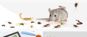 insecticidas para bichos