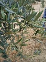 Charlas sobre agricultura impartidas por Asaja