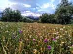 cubierta de hierba