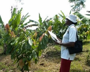 Quarantine Inspector conducting Inspection of Farm for certification purpose