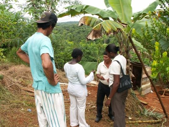 Quarantine Inspector conducting Inspection for Black Sigatoka