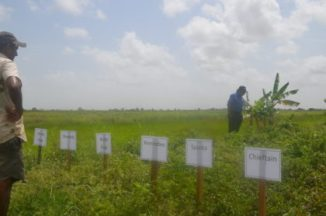 Chief Executive Officer, National Agricultural Research and Extension Institute, Dr. Oudho Homenauth (in blue), examines the plot where the pilot potato project is being facilitated