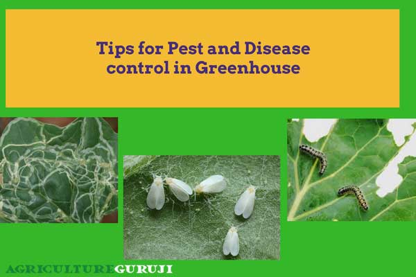 pest and disease control in greenhouse