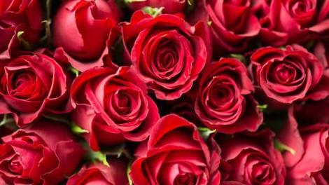 economic of dutch rose