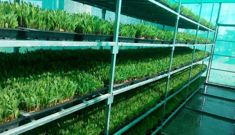 hydroponic system design
