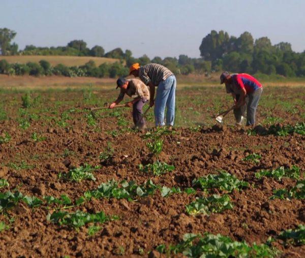 Sols Algériens et Fertilisation
