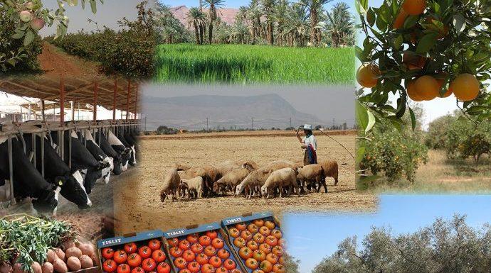 Développement Rural en Algérie: Gestion des Projet PPDRI