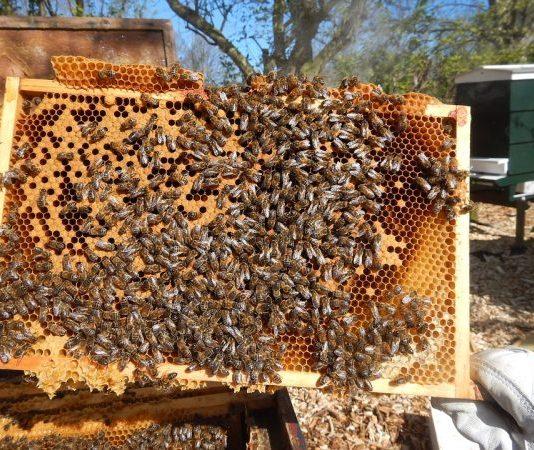 La ruche «kônya» ou ruche aux cadres à couvain rotatifs