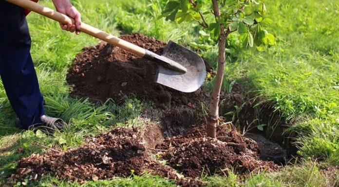 Le Compost et l'Importance de la Fertilisation des Vergés des Arbres Fruitiers