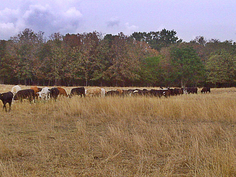 A look at the Arkansas Drought from the cattle pasture (4/6)