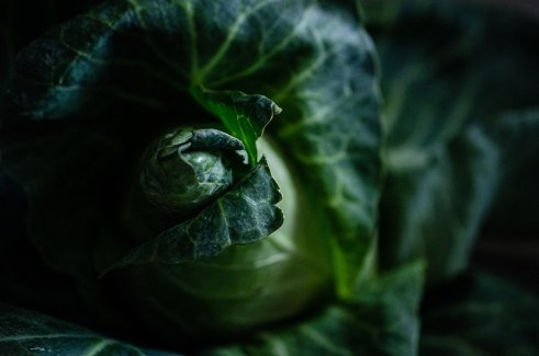 cabbage-5337431_1280