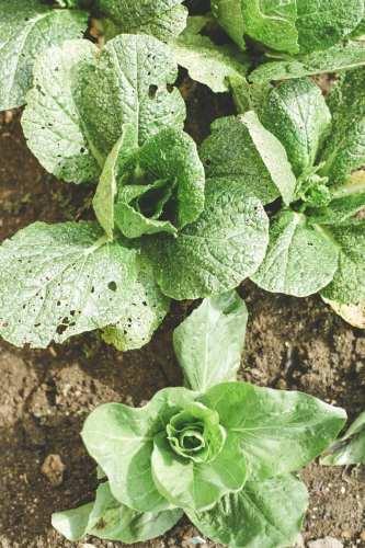 Gardening Tips Agri Education Pakistan