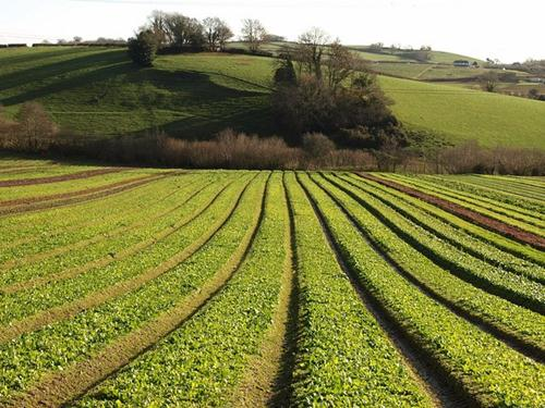 Role of  plant population for crop productivity