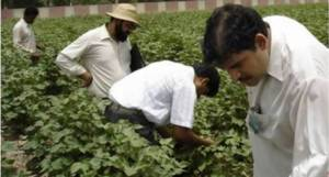 us-scientists-in-pakistan-to-review-cotton-productivity-1440593804-1116