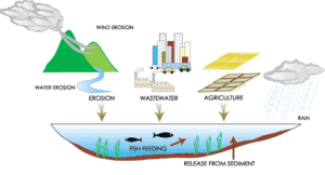 Eutrophication A Serious Pollution Problem 2