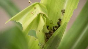 sn-caterpillars (Copy)