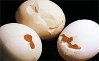 Egg Quality- Gross cracks