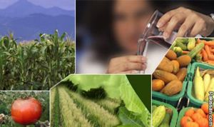 biotechnology in agriculture