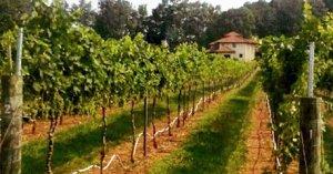 vineyard_house_view
