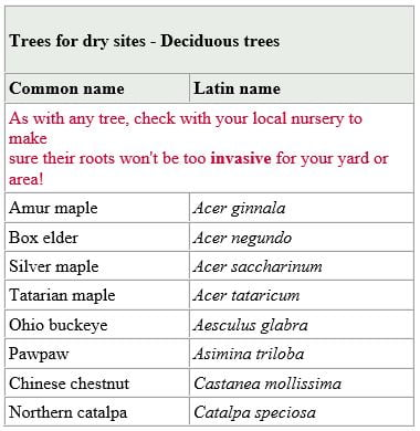 trees for dry sites