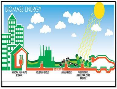 biomass - 1