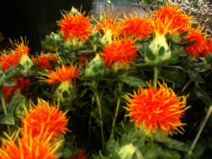 Significance of Safflower as Oilseed Crop in Pakistan