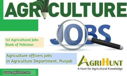 ao jobs
