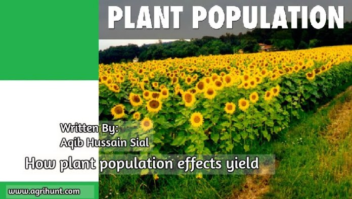 How plant population effects yield