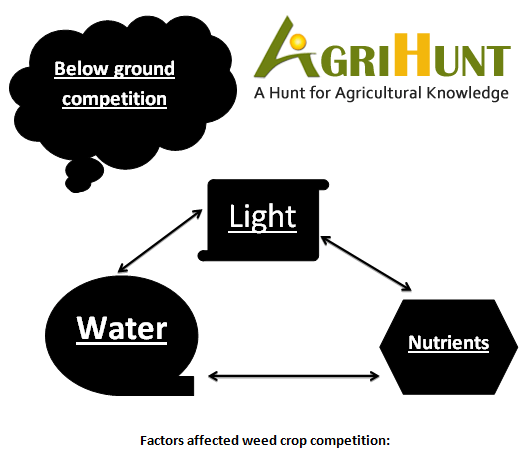 Factors affecting weed crop competition: