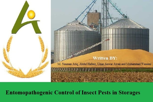 Entomopathogenic Control of Insect Pests in Storages