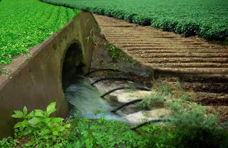 Vegetable Production Using Sewage Water- A threat or Need of Time?