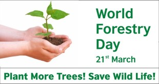 world-forest-day-and-pakistan