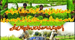 agriculture-in-pakistan