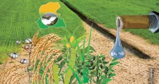 water-shortage-could-affect-kharif-crops