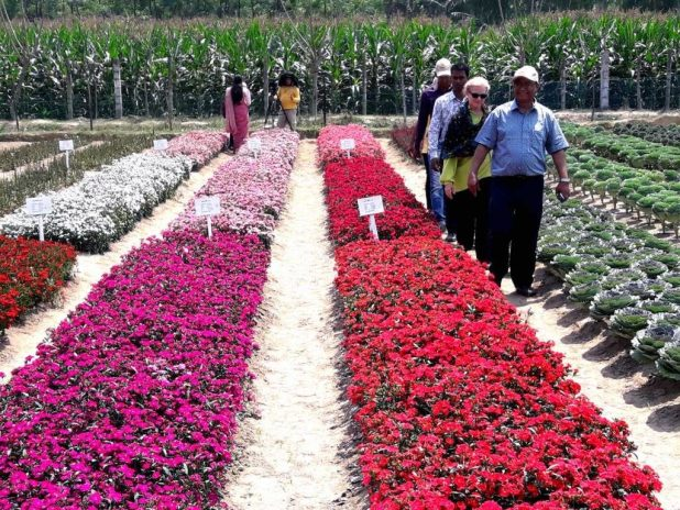Floriculture – Money Making Agriculture Based Business