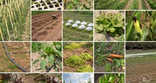 organic-farming-in-pakistan