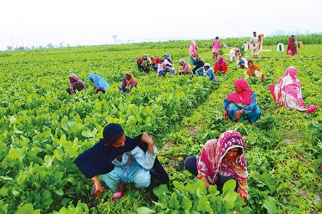 Women in Pakistan Agriculture